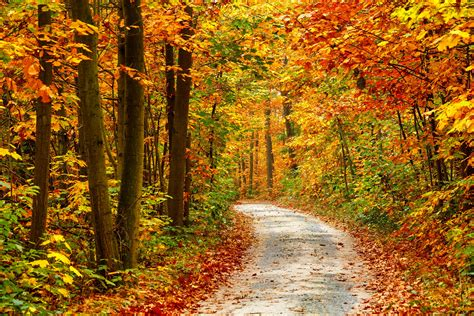 autumn landscape wallpaper 177893 autumn fall tree forest landscape nature leaves wallpaper