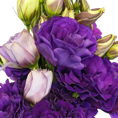 hues of purple hues of purple designer lisianthus flower for october to