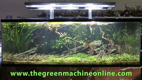 Green Machine Aquascape by Altum Aquascape The Green Machine By Andrew Mack