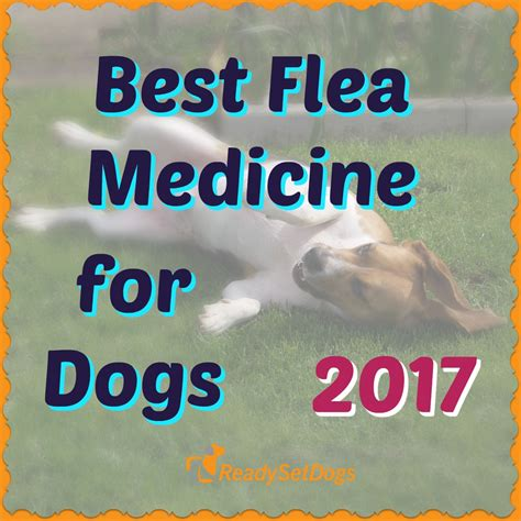 best flea medicine for dogs best flea medicine for dogs 2017 spot on treatments and tablets