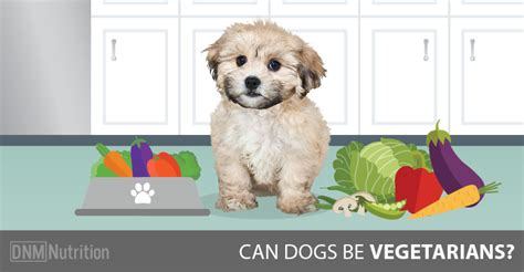 can dogs be vegetarian can dogs be vegetarians dogs naturally magazine