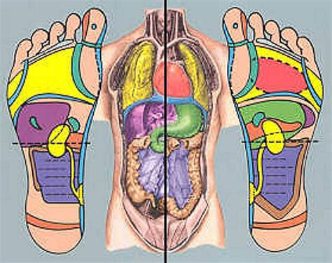 Reflexology And Detoxing by Reflexology On Foot Chart Acupressure And Charts