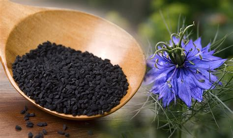 blackseed and hiv 2015 black seed extract can be a source of potential medicine