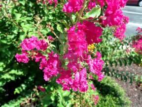 pink flower bush by cryas on deviantart