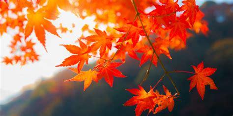 fall colors 2017 fall foliage map 2017 autumn foliage map 2017