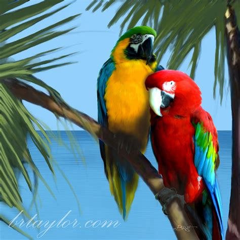 colorful parrots colorful parrot drawing
