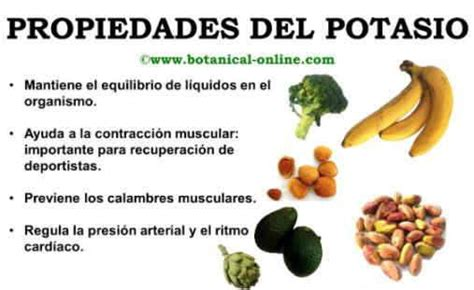 alimentos con alto contenido de potasio blog de plantas 191 por qu 201 debemos comer alimentos con