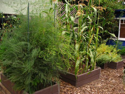 edible backyard plants edible garden profile christy wilhelmi author of gardening for geeks kcrw good food