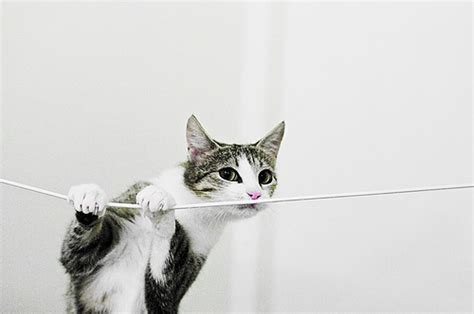 String Cat - cat on a string flickr photo