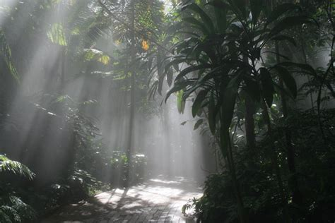 jungle light free stock photos rgbstock free stock images