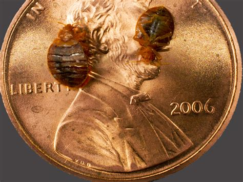bed bugs public health sanitation program