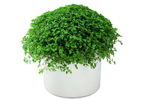 houseplants that don t need light 7 beautiful indoor plants that don t need sunlight to