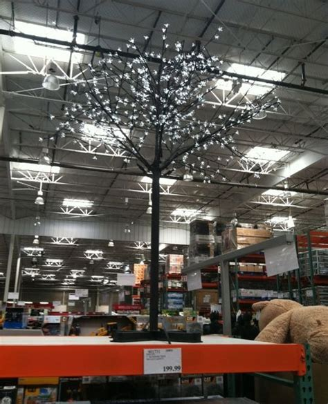 costco white lights trees costco mobawallpaper