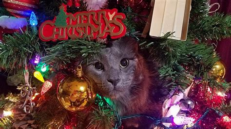 repel cat christmas tree a story how to a sensible cat ask dr guthrie pet hospital