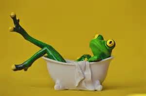 Free photo frog bath swim relaxation relax free