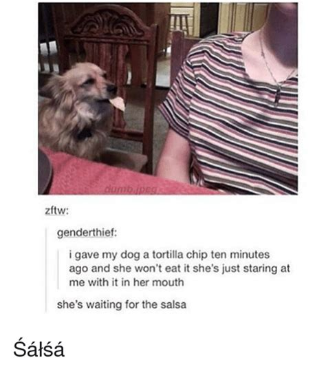 can dogs eat tortilla chips 25 best memes about tortilla chips tortilla chips memes