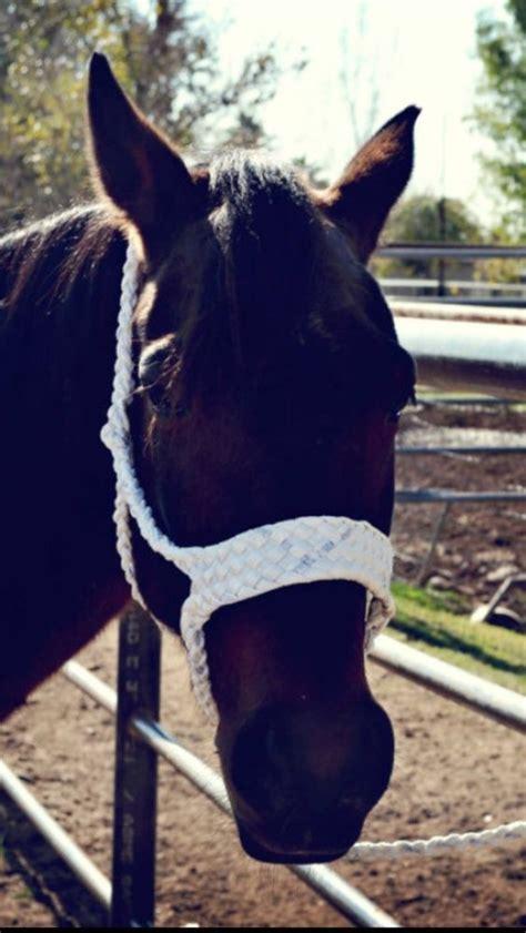 hand braided mule tape horse halter hands tape  horses