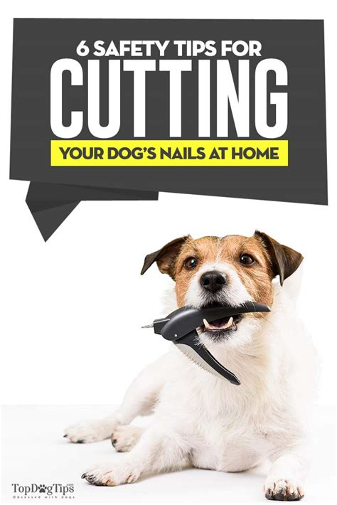 puppy s at home tips 6 safety tips for cutting s nails at home by yourself