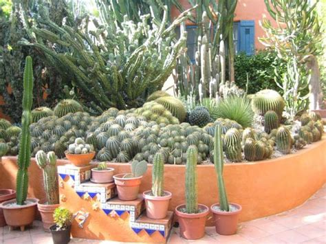 14 best images about cactus succulent garden on