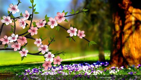 google images flowers spring flowers 3d parallax hd android apps on google play