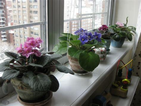 fensterbrett garten fensterbank deko mit pflanzen die einen kleinen garten