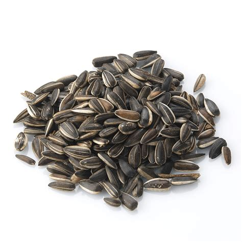 striped sunflower seeds for birds