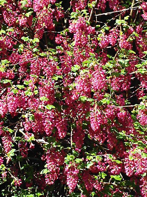 flowering shrubs 301 moved permanently