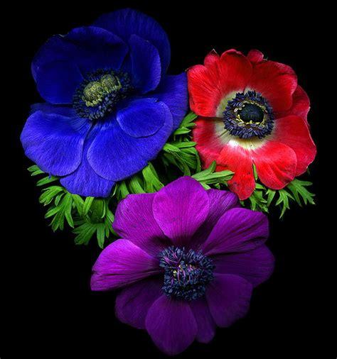 imagenes de flores extrañas y hermosas gifs hermosos hermosas flores encontradas en la web