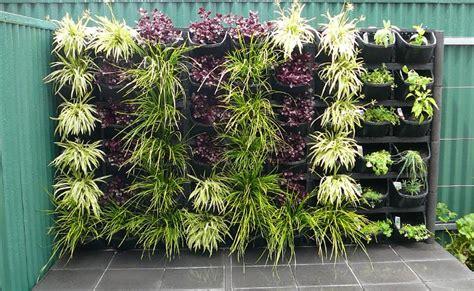 vertical gardens adelaide feature walls  small gardens