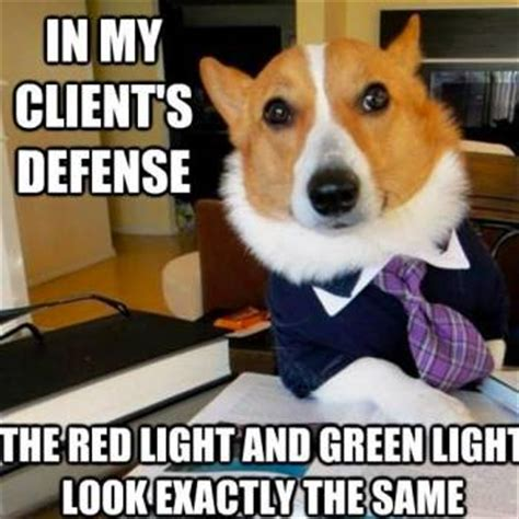 Corgi Lawyer Meme - the very best of the lawyer dog meme