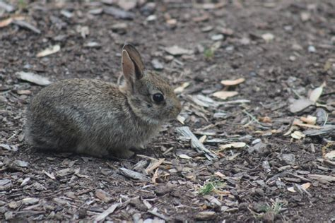 what to do with baby bunnies in backyard what to do with baby bunnies in backyard 28 images