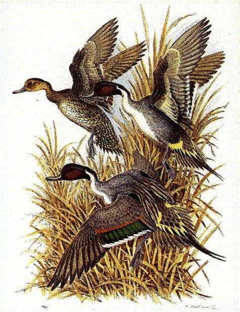 hutte oiseau les 25 meilleures id 233 es de la cat 233 gorie chasse canard sur