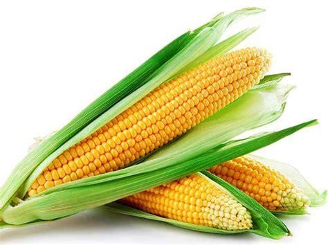 manfaat jagung bagi kecantikan  kesehatan tubuh