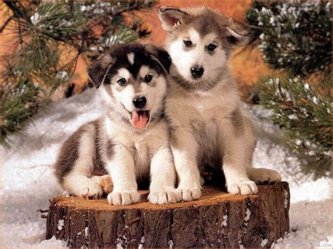 the wallpaper backgrounds dog wallpaper dog wallpapers wallpaper cave