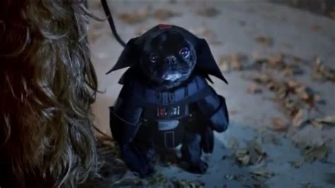 darth vader pug costume darth vader pug pugs