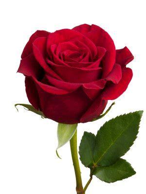 Wallpaper Stiker Putih Bunga Pink Kode 44 300x400px 32 44 Kb Flower 437126