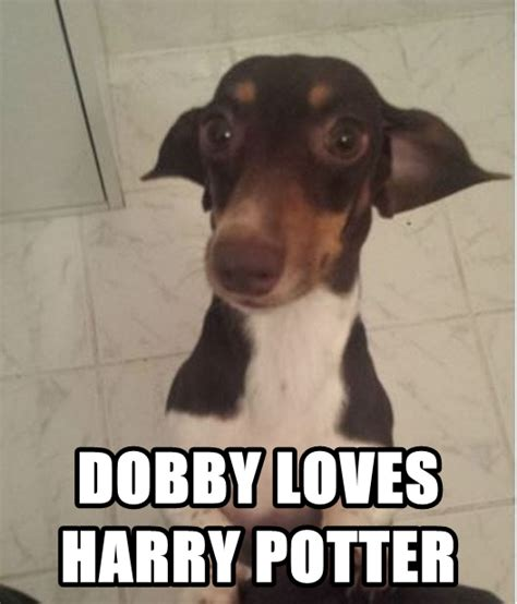 Dobby Meme - dobby dog meme by sir meme on deviantart