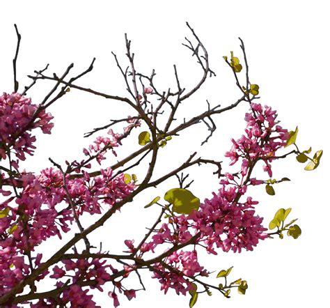 koleksi gambar format png arie cellular koleksi gambar bunga format png