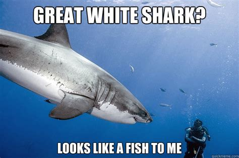 Funny Shark Meme - great white shark meme memes pictures memes