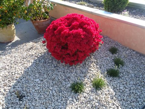 pflegeleichte gartenpflanzen mediterraner garten winterhart gartens max