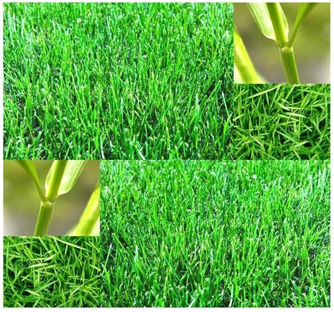 Grass Seed by 1 Oz Bermuda Grass Seed Lawn Grass Seeds Hardy