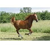 Fotos  Tiere Pferde Pferd