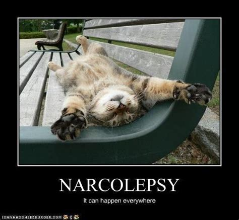 Narcolepsy Meme - sleepy meme related keywords suggestions sleepy meme