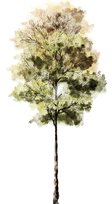 water color tree architectural rendering 3d rendering 3d architectural