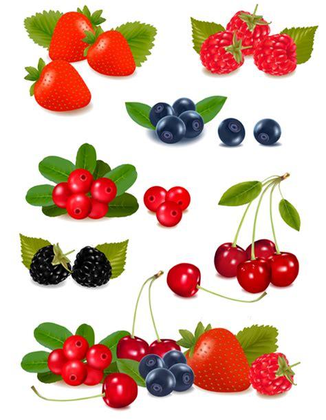 berry design berry design elements vector 01 vector food free