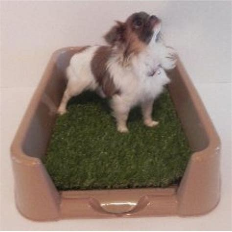 litter box a puppy rascal litter box quot quot rascal litter box turn your