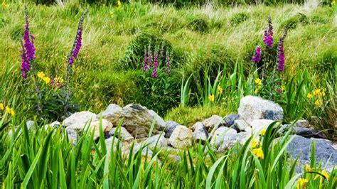 fiori esotici fiori esotici