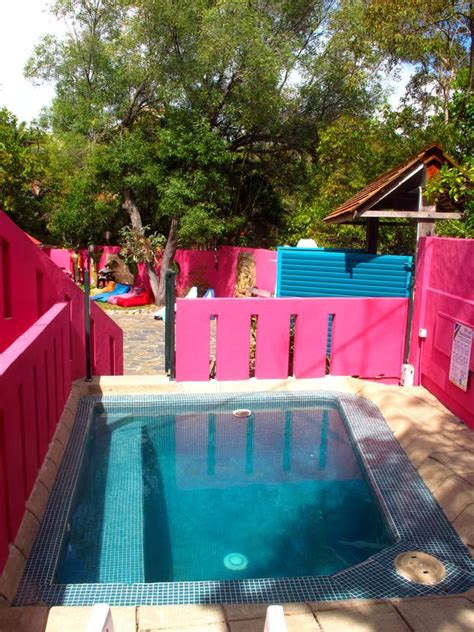 dolphins house in noosa australia find cheap