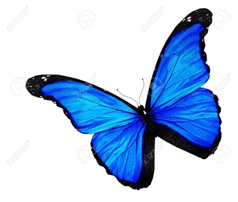 imagenes mariposas jpg mariposa azul en el fondo blanco ideas pinterest