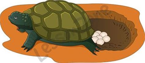 The Tortoise Will Lay Eggs Mainan Anak Limited frog egg laying wallpaper